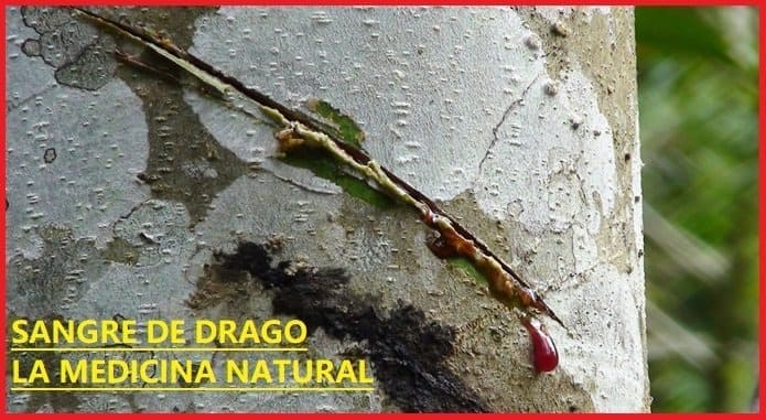 que es sangre de drago